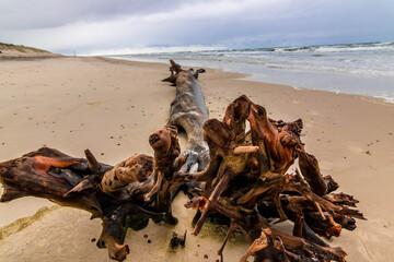 Fototapeta kłoda na plaży morze brzeg obraz