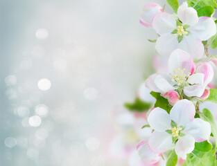 Fototapeta Apple tree blossom