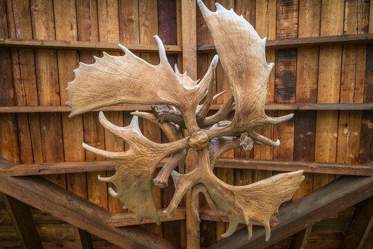 USA, Maine Freeport. Moose antlers.