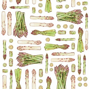 Watercolor and ink spring asparagus pattern on white. Seamless pattern with freshly asparagus. Colorfull background for textile, wallpapers, print and banners.