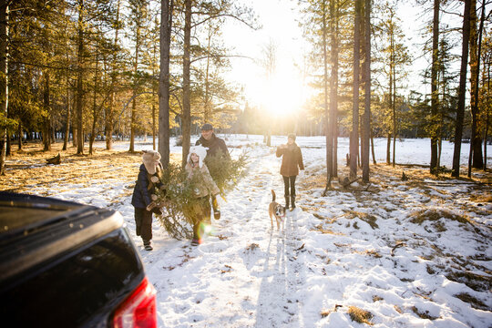Family with dog choosing Christmas tree in the woods