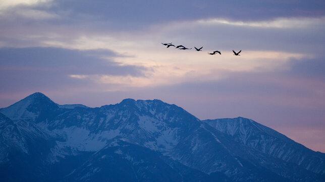 Sandhill Cranes migrating above Colorado