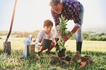 Fototapeta Grandfather and grandson planting a tree obraz
