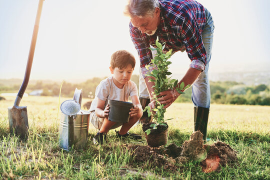 Grandfather and grandson planting a tree