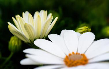 Obraz Kwiat Flower - fototapety do salonu