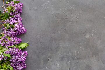 Flat lay composition of spring flowers - branches of lilac top view