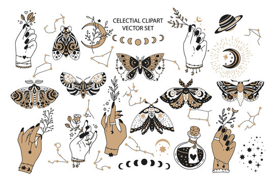 Magic celestial vector moon and star illustration. Isolated mystery graphicv symbols. Sacred set, with woman hand and butterfly.