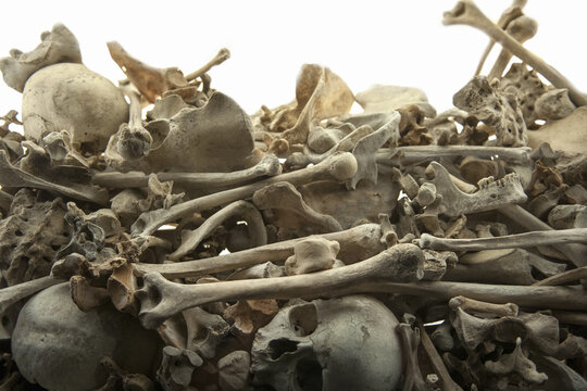 Large amount of human bones thrown into a mass grave
