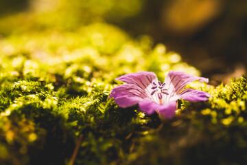 Obraz Kwiat samotny - fototapety do salonu