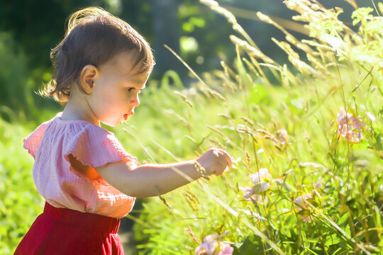 Little girl picking flowers in the field
