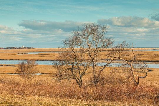 USA, Massachusetts, Cape Cod, Eastham. Fort Hill, Nauset Marsh.