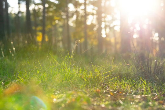 Close-up of meadow growing on land against trees in forest during sunny day, Cannock Chase, UK