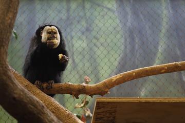 Closeup shot of a monkey eating at the Kansas City zoo