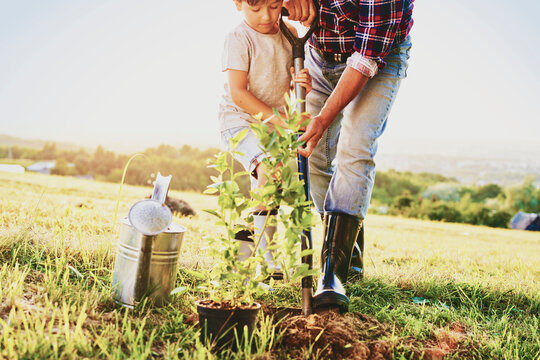 Little boy helping to plant a tree