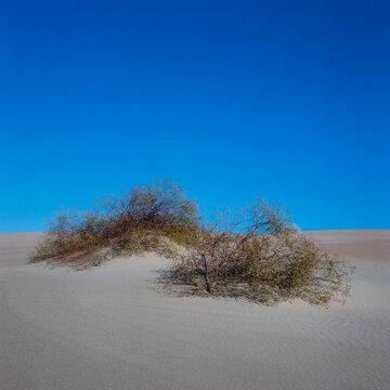 Yuma desert Arizona USA. Sanddunes.