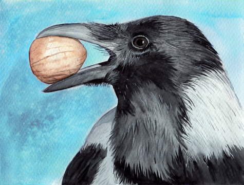 Watercolor picture of a black raven with a nut in its beak on the pale blue background