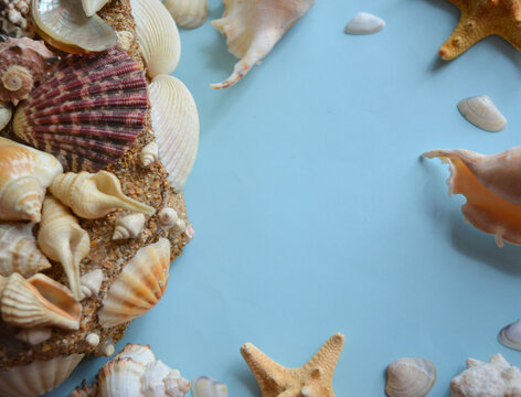 beautiful marine composition. seashells and stars isolated on blue background ,relaxation, rest