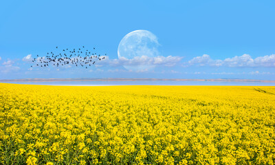 Yellow mustard field landscape industry of agriculture with full moon - Germany
