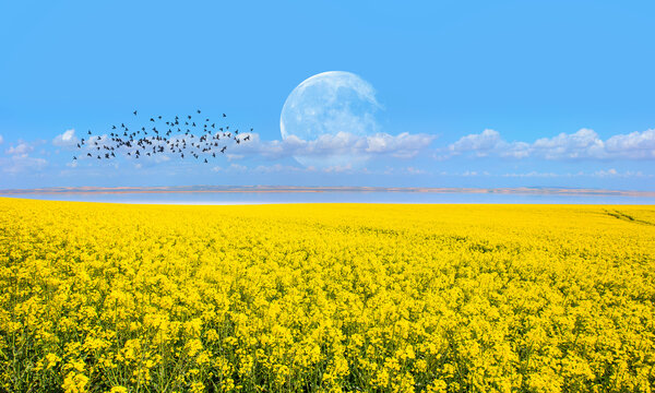 """Yellow mustard field landscape industry of agriculture with full moon - Germany """"Elements of this image furnished by NASA """""""