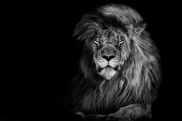 Aluminium Prints Lion king isolated on black , Portrait Wildlife animal