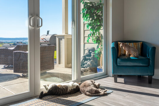 Three cats including a hairless sphinx lounge in the sun in front of a sliding glass door inside a home.