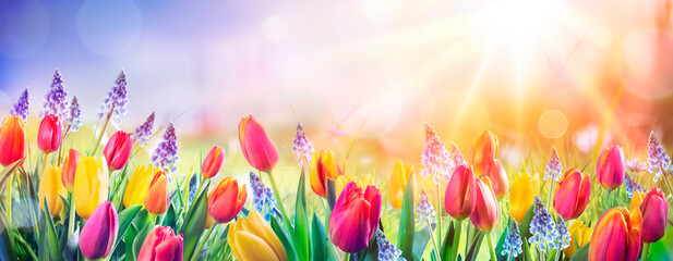 Abstract Defocused Spring Background - Tulips And Hyacinth Flowers In Sunny Field