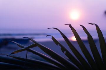Liście palmy na tle zachodzącego słońca, piękne naturalne tło.