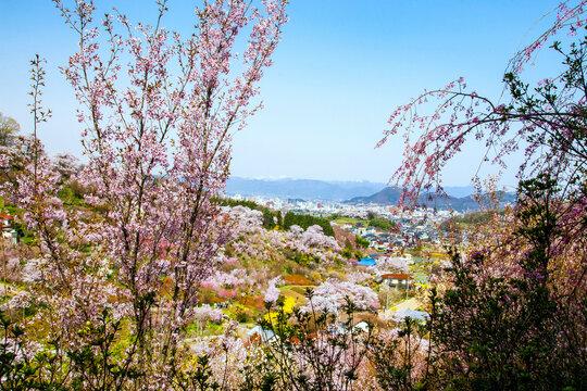 花見山からの眺望