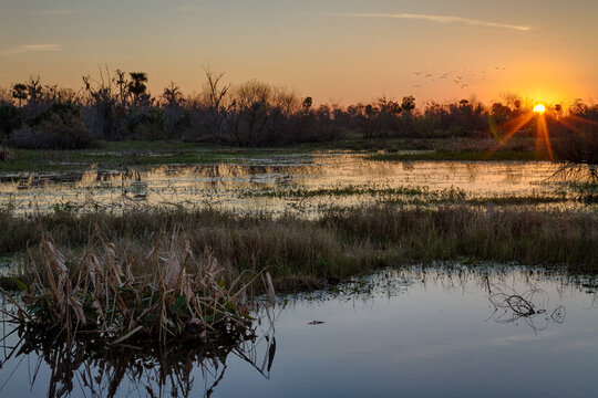 Took a trip to the Circle-B-Preserve Preserve for sunrise today.  It was cold, for Florida, upper 30's, but well worth the trip.