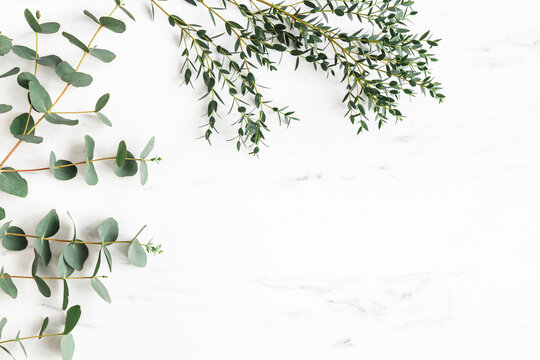 Eucalyptus leaves on marble background. Frame made of eucalyptus branches. Flat lay, top view