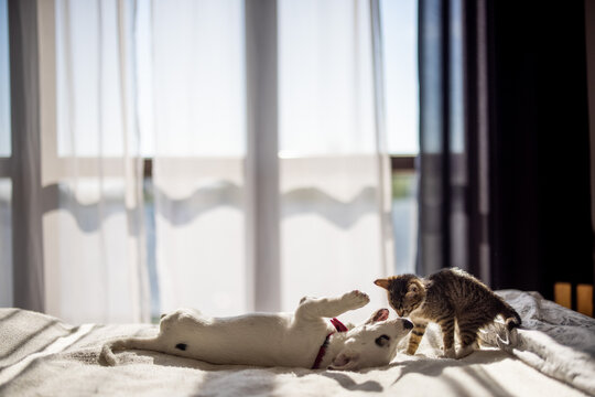Little cat and doggy playing on the bed.
