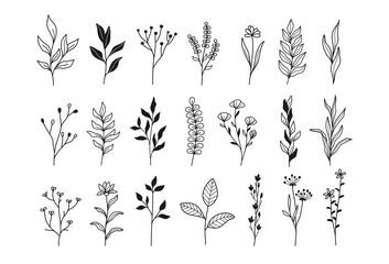 Fototapeta Plants and flowers, botanical illustrations obraz