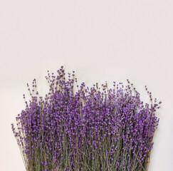 Purple lavender for celebration decoration design on bright paper background. Vintage floral card.