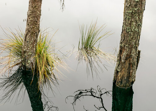 lake shore, swampy forest background, bog pines and birches, land covered with swamp typical plants, swamp