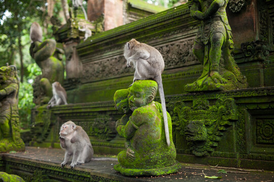 Bali Monkey Forest Temple Statues Moss Ape Animals