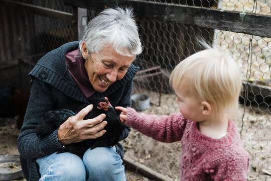 Grandmother showing granddaughter a chicken