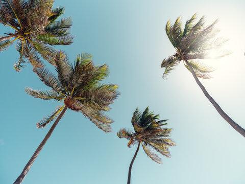 A beach in Barbados, Caribbean