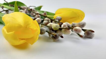 Fototapeta Dwa żółte tulipany i gałązka wierzby. obraz