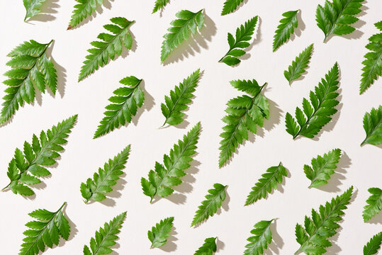 Green leaves pattern on white background. Flat lay.