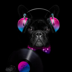 dog listening to music having a party