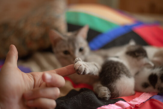 mother cat touching my finger as the kittens are napping nearby