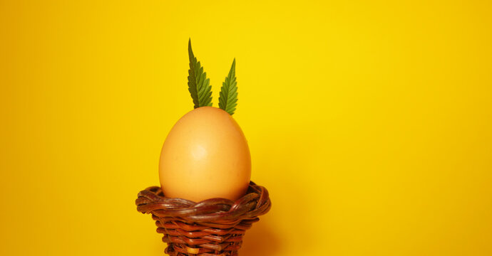 Bunny made of Cannabis leaves. Easter egg. Yellow background.