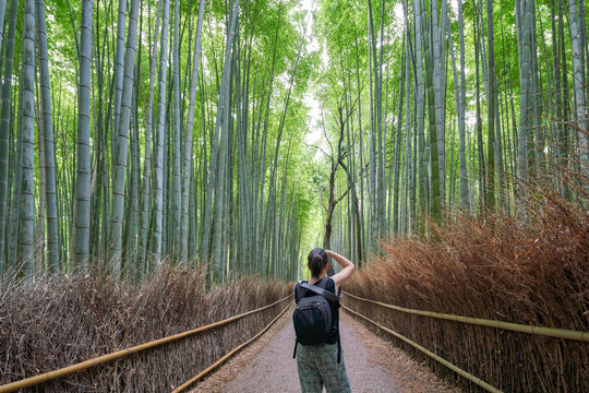 Unrecognizable woman taking pictures of bamboo forest