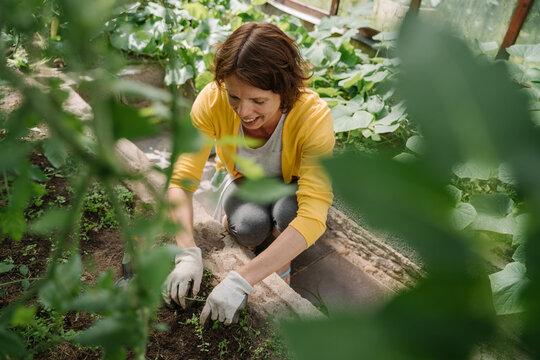 Woman Weeding At Greenhouse