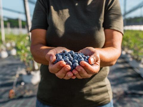 Crop farmer showing handful of blueberries