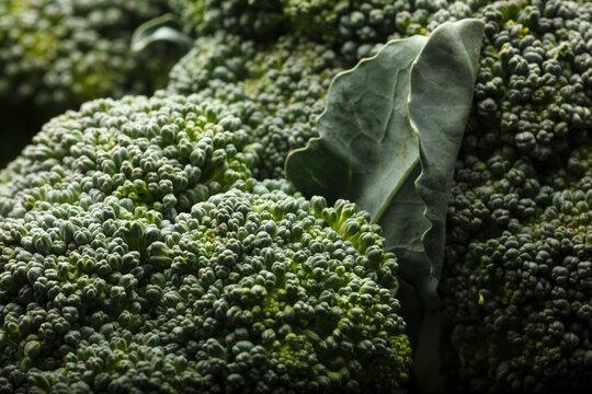 USA, Oregon, Keizer, broccoli.