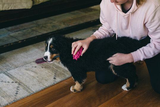 brushing dog