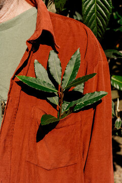 Close-up of Bay tree leaves on jacket pocket