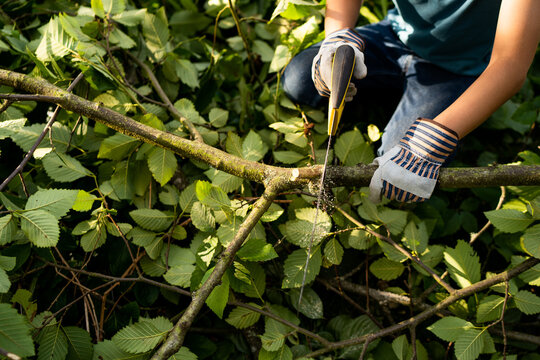 Child sawing a branch