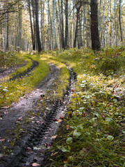 Fototapeta The road in the forest, washed out by the rain. Mud. SUV.